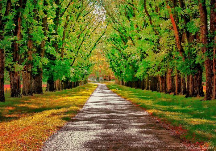 A Road Through Autumn