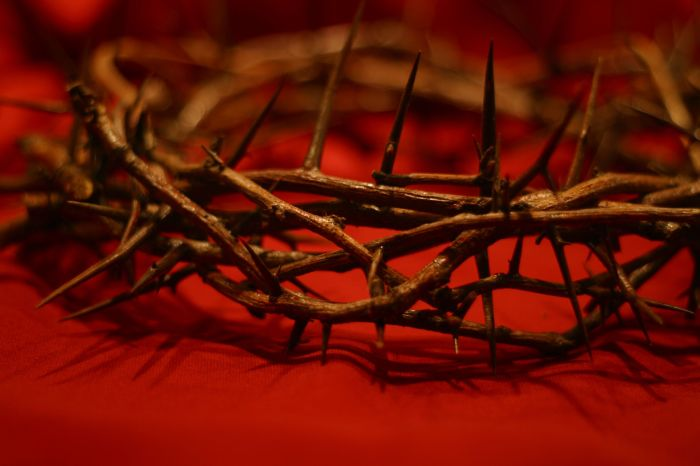 AdobeStock_1838222Crown of Thorns